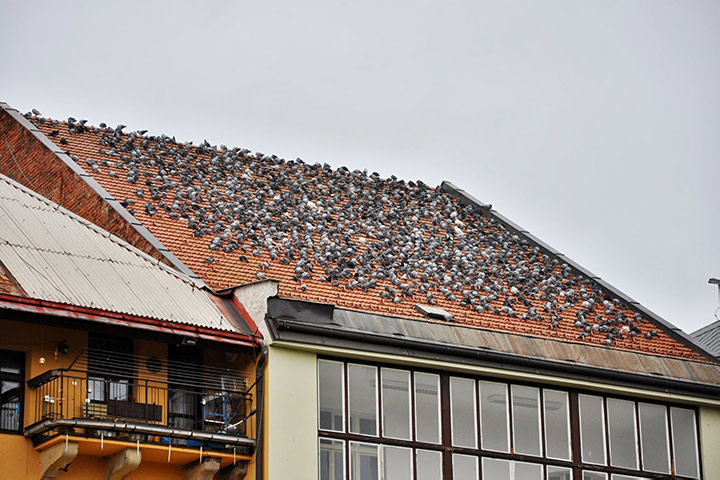 A2B Pest Control are able to install spikes to deter birds from roofs in Willesden Green.