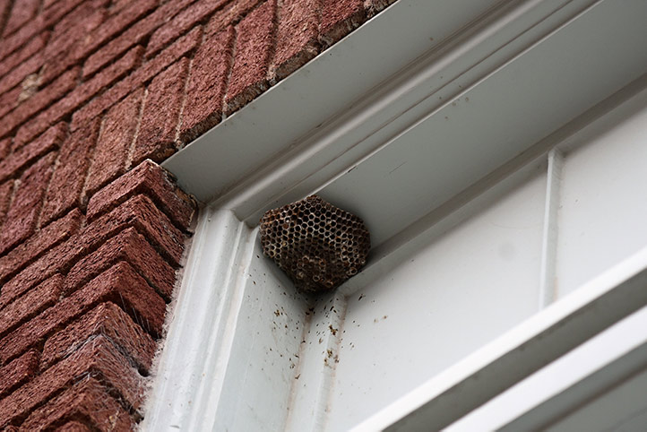 We provide a wasp nest removal service for domestic and commercial properties in Willesden Green.